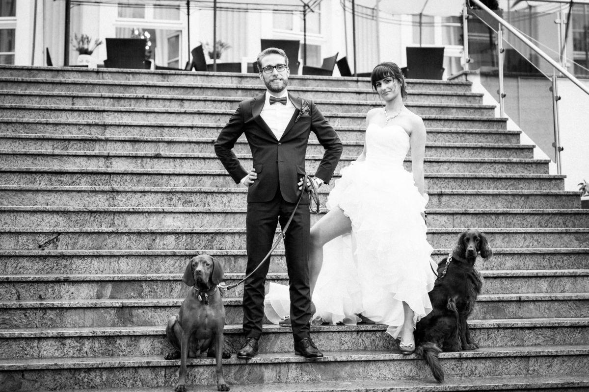 Brauthunde