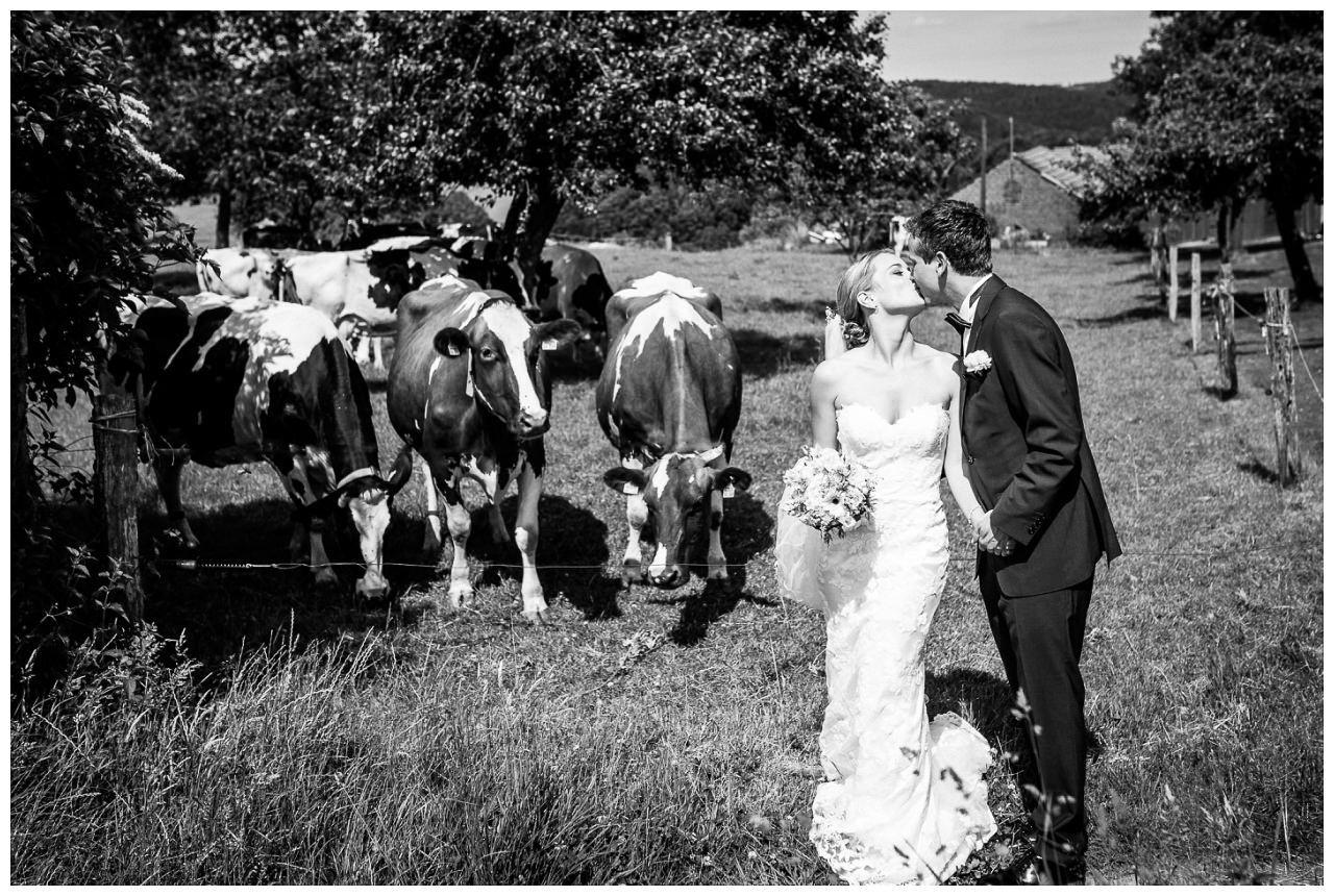 Paarshooting Hochzeit, das Brautpaar steht auf einer Kuhwiese.