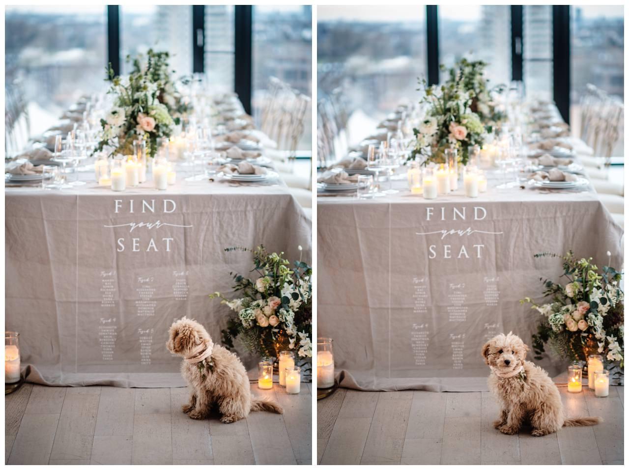 hochzeitsfotos düsseldorf hochzeitsfotograf shooting hund haustier 17 - Hochzeitsfotos in Düsseldorf